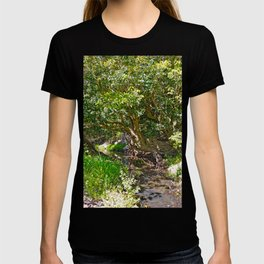 Wise old tree T-shirt