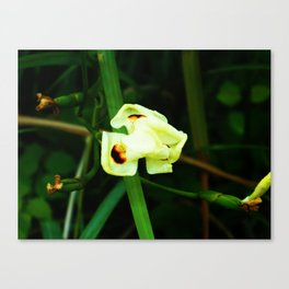 Unbloomed Flower Canvas Print