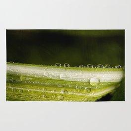 Garden Raindrops Rug
