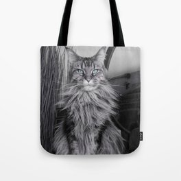 Chat - cat - linx - main coon - am Tote Bag