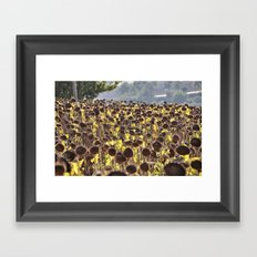Sunflower 11 Framed Art Print