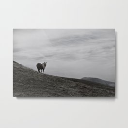 A Pony in the Pyrenees Metal Print