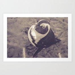 Adorable African Penguin Series 3 of 4 Art Print