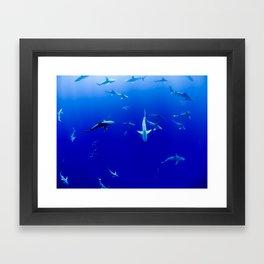 Sharks! Framed Art Print