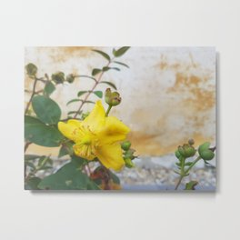 yellow flower - yellow mural: natural photo Metal Print
