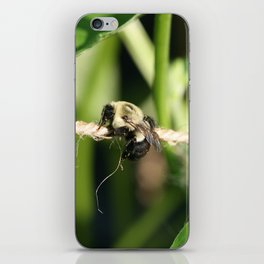 Bee Hanging Onto Twine Glistening in Sunlight After Working (Photography: Critters and Creatures) iPhone Skin