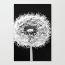 missing dandelion Canvas Print