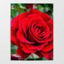 Rose revolution Poster