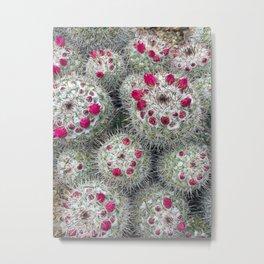 Blooming Pincushion Cactus, Tucson, Arizona Metal Print