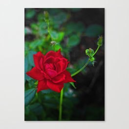 The Watchful Mother Canvas Print