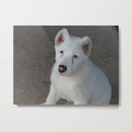 Alabai puppy dog in the yard Metal Print