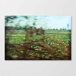 Speed Flowers Canvas Print