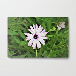 Pretty Purple Californian Flower by Reay of Light Photography Metal Print