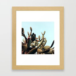 SUmmer Cactus Framed Art Print