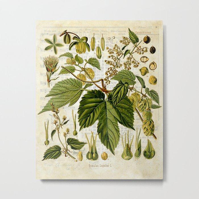 Common Hop Botanical Print on Vintage almanac collage Metal Print