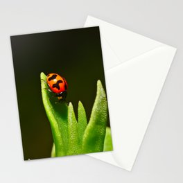 An Orange Ladybird Walking Down A Pointy Succulent Stationery Cards