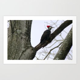 Holiday Pileated Art Print