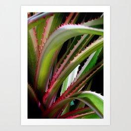 Bromeliads Art Print