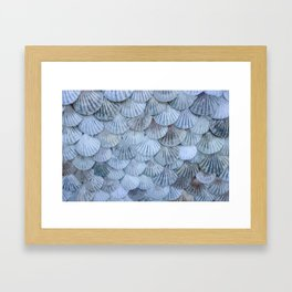 Elegant Seashells Framed Art Print