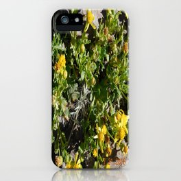 road trip, yellow, flower, high altitude, nature, vegetation, plant, plantlife iPhone Case