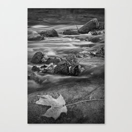 Black and White Autumn Leaf on a Rock by the Flowing Thornapple River Canvas Print