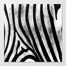 White Zebra by B & BB Canvas Print