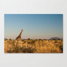 Giraffe on a Morning Walk Canvas Print