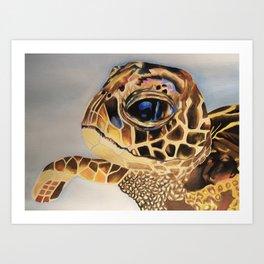 Colorful Sea Turtle Art Print