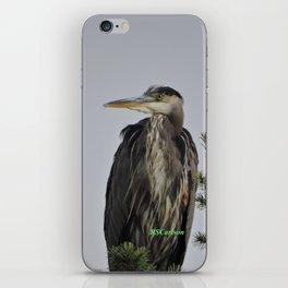 Tree Top Heron at Dawson Creek Park iPhone Skin