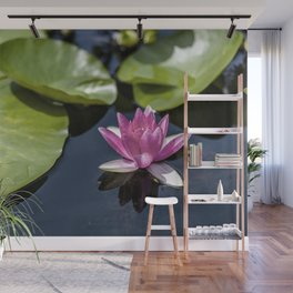 Pink Water lily at the pond Wall Mural