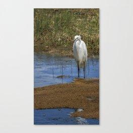 Snowy Egret of Chincoteague No. 3 Canvas Print