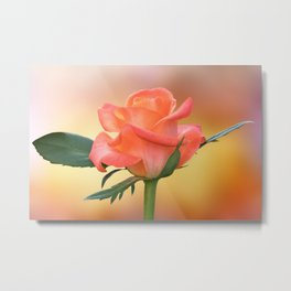 isolated rose for holidays on texture background Metal Print