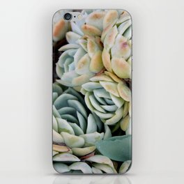 California Potted Succulents iPhone Skin