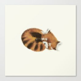 Baby Red Panda (Off-White) Canvas Print