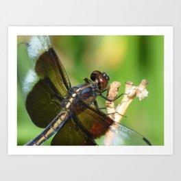 summer dragonfly VI Art Print