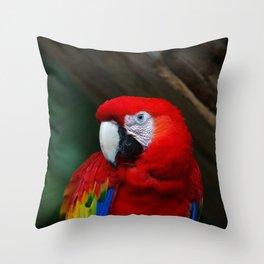 Scarlet Macaw Bird Throw Pillow