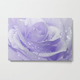 Rose with Drops 085 Metal Print