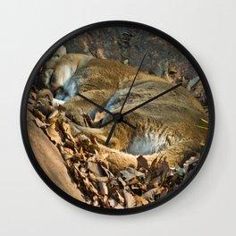 Sleeping Mountain Lion Wall Clock