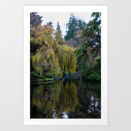 tranquil willow reflection Art Print
