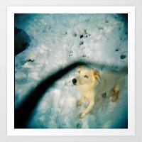 Husky in the elements Art Print