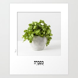 coriander herb poster with hebrew letters for the kitchen Art Print