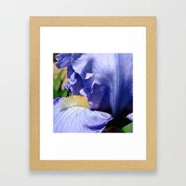 Blue Lavender Iris Close Up Framed Art Print