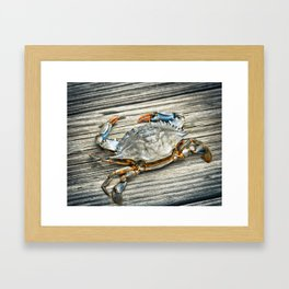 """Busted Peeler"" - Maryland Blue Crab Framed Art Print"