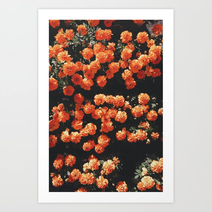 Orange flower fleurs Art Print