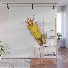 Sulphur Knapweed Moth (Agapeta zoegana) Wall Mural