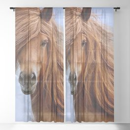 Majestic Horse With Big Mane Ultra HD Sheer Curtain