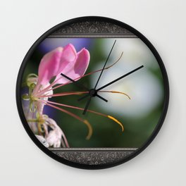 Cleome named Sparkler Pink Wall Clock