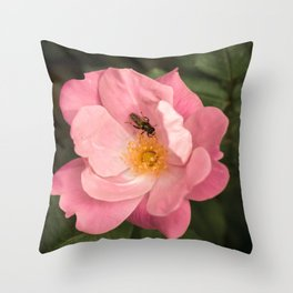 A rose and the fly insect Throw Pillow