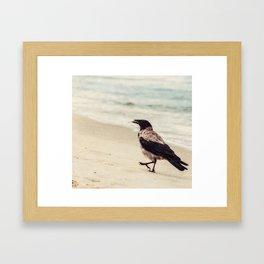 Feed The Crow Framed Art Print