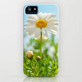 Daisy 0143 iPhone Case